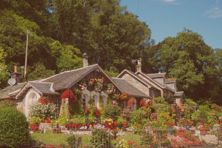 Plantas para tu balcón, terraza o jardín.